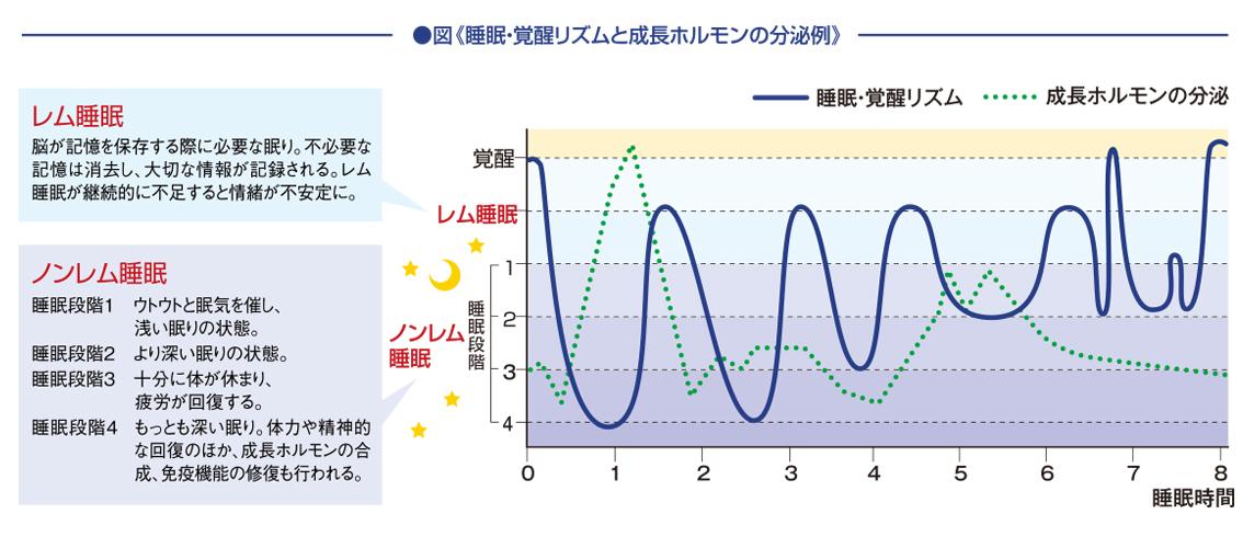 睡眠・覚醒リズムと成長ホルモンの分泌例