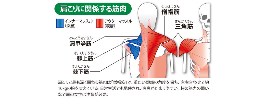 肩こりに関する筋肉
