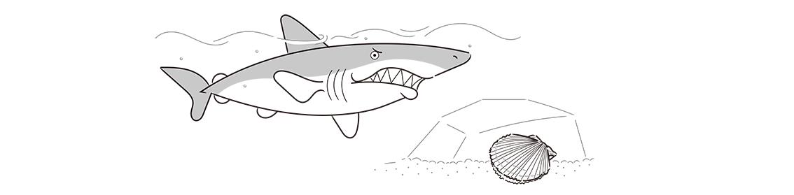ホタテの貝殻、サメ